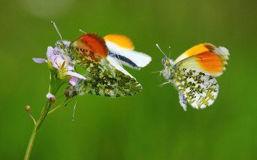 Cursus Flora en Fauna
